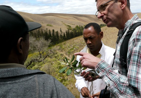 Chris Birkinshaw (right) and Christian Camara (center), both of MoBot, inspect flora at the Ankafobe reserve