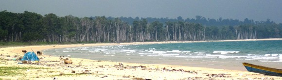 Dead, bleached trees are the most visible legacy of the tsunami