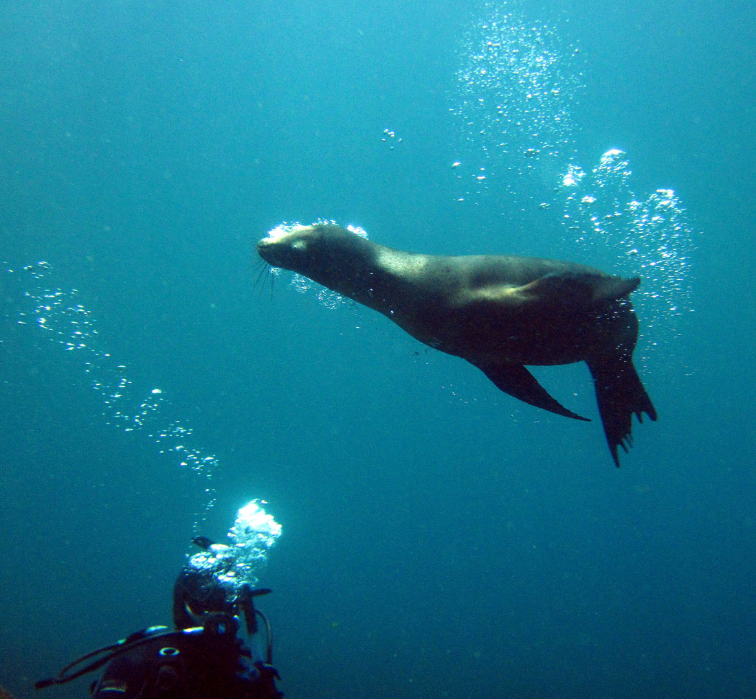 ADAM JADHAV » Blog Archive » When sea lions attack!?!