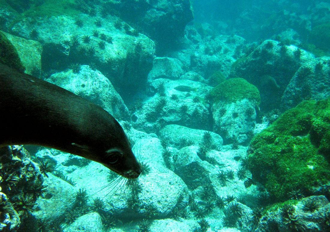 ADAM JADHAV » sea lion