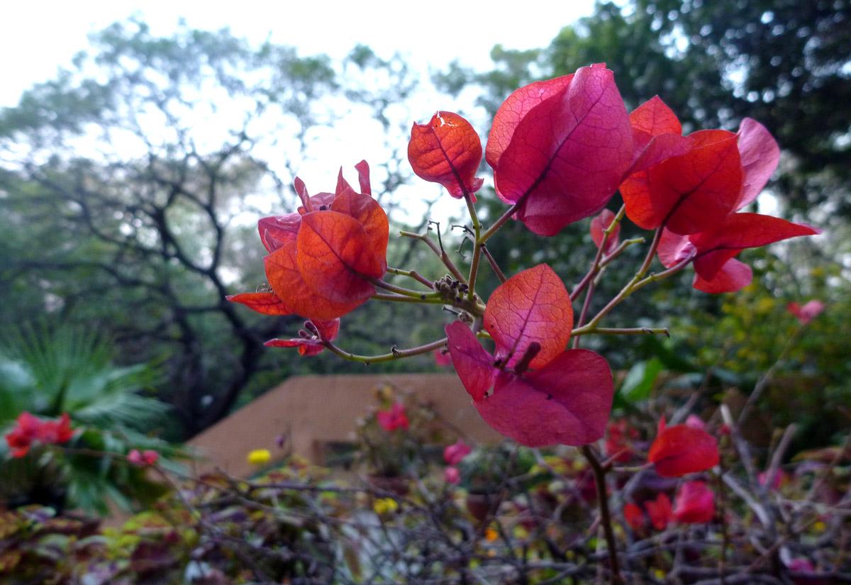 ADAM JADHAV » flower