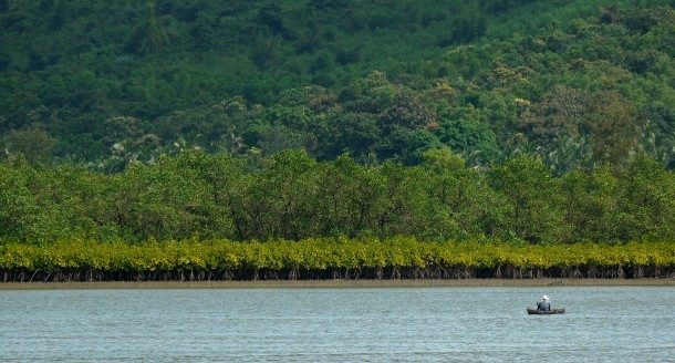 Mangroves that will be lost if the state government has its way.